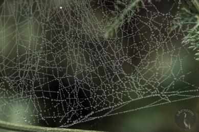spiders_web_0092p