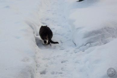cat_inSnow_0059p