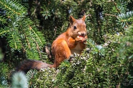 squirrel_0031p